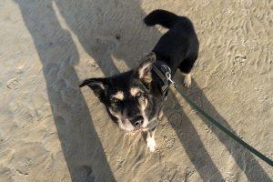 Im Nationalpark Niedersächsisches Wattenmeer müssen Hunde an die Leine.